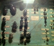 and bigger, creepier bugs!